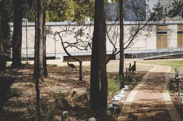 Kangaroos in the bush. Image Credit: Matt Woods
